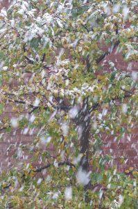 il-neige-un
