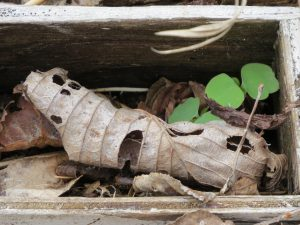 le-cercueil