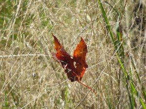 papillon-feuille-un