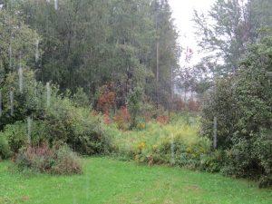sous-la-pluie