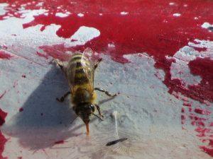 abeille-un