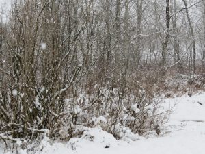 tempete-de-neige-trois