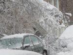 Branche cassée sous le poids de la neige